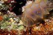 海洋生态0035,海洋生态,海洋风情,