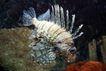 海洋生态0037,海洋生态,海洋风情,