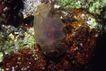 海洋生态0046,海洋生态,海洋风情,水底