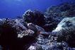 海洋生态0049,海洋生态,海洋风情,一只海龟