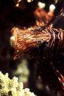 海洋生态0059,海洋生态,海洋风情,