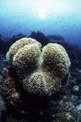 海洋生态0069,海洋生态,海洋风情,鱼群 海中 景色