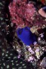 海洋生态0071,海洋生态,海洋风情,金色 水草 游鱼