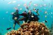 海底探索0016,海底探索,海洋风情,水底 三人行 会商