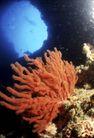 海底探索0021,海底探索,海洋风情,海底 世界 美景