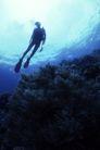 海底探索0029,海底探索,海洋风情,
