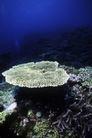 海底探索0030,海底探索,海洋风情,