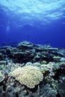 海底探索0037,海底探索,海洋风情,