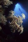 海底探索0040,海底探索,海洋风情,