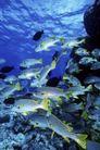 海底探索0043,海底探索,海洋风情,群鱼