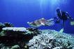 海底探索0050,海底探索,海洋风情,一个潜水员