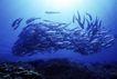 海底探索0051,海底探索,海洋风情,
