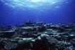 海底探索0056,海底探索,海洋风情,