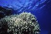 海底探索0057,海底探索,海洋风情,