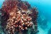 海底探索0064,海底探索,海洋风情,珊瑚石 海洋 化石
