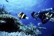 海底探索0068,海底探索,海洋风情,海中 美景 景色