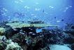 海底探索0071,海底探索,海洋风情,深海 丰富 鱼产