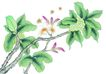 花鸟国画0078,花鸟国画,中华文化,水彩 自然 写生
