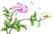 花鸟国画0092,花鸟国画,中华文化,花朵 娇艳 蝴蝶