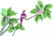花鸟国画0096,花鸟国画,中华文化,黄鹂 绿叶 叶子