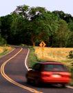 道路0088,道路,交通,标志 方向 树木