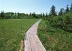 宽广大道0171,宽广大道,综合,走在乡间 木板路 绿色浓浓