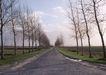 宽广大道0172,宽广大道,综合,初春 枯木 延伸至远方的路