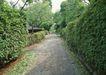 宽广大道0180,宽广大道,综合,浪漫乡间 笔直道路 整齐灌木