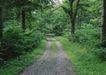 宽广大道0185,宽广大道,综合,小道 丛林 公园
