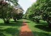 宽广大道0186,宽广大道,综合,果园 树木