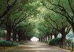 宽广大道0189,宽广大道,综合,树荫 绿化