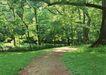 宽广大道0192,宽广大道,综合,树下小径