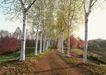 宽广大道0202,宽广大道,综合,白桦树