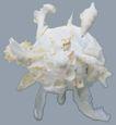 贝壳海洋0013,贝壳海洋,综合,球形 周身 触头