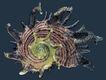 贝壳海洋0015,贝壳海洋,综合,旋转 触须 海生