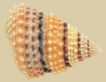 贝壳海洋0031,贝壳海洋,综合,海螺 贝壳 外表
