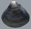 贝壳海洋0065,贝壳海洋,综合,贝类 壳子 线条