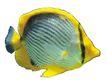 海洋鱼0096,海洋鱼,综合,海洋鱼 多色 美丽