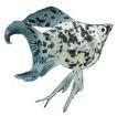 海洋鱼0103,海洋鱼,综合,生物 斑点