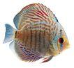 海洋鱼0107,海洋鱼,综合,