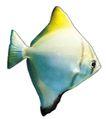 海洋鱼0112,海洋鱼,综合,