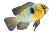 海洋鱼0119,海洋鱼,综合,