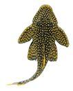海洋鱼0125,海洋鱼,综合,