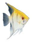 海洋鱼0129,海洋鱼,综合,