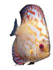 海洋鱼0130,海洋鱼,综合,