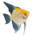 海洋鱼0135,海洋鱼,综合,