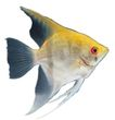 海洋鱼0136,海洋鱼,综合,
