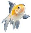 海洋鱼0137,海洋鱼,综合,