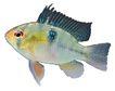 海洋鱼0138,海洋鱼,综合,