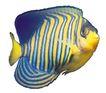 海洋鱼0140,海洋鱼,综合,